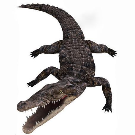 Noggins Crocs3D打印模型,Noggins Crocs3D模型下载,3D打印Noggins Crocs模型下载,Noggins Crocs3D模型,Noggins CrocsSTL格式文件,Noggins Crocs3D打印模型免费下载,3D打印模型库