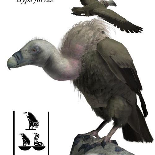 秃鹰3D打印模型,秃鹰3D模型下载,3D打印秃鹰模型下载,秃鹰3D模型,秃鹰STL格式文件,秃鹰3D打印模型免费下载,3D打印模型库