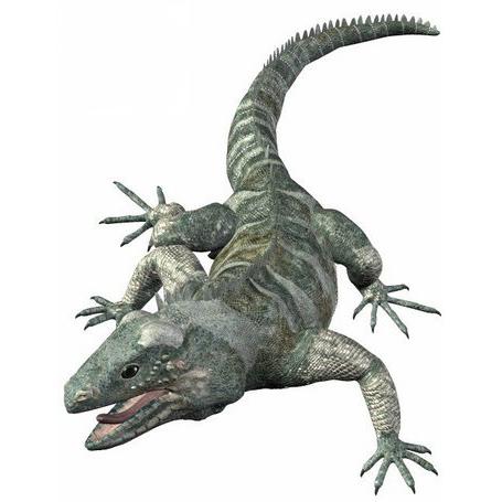 鬣蜥3D打印模型,鬣蜥3D模型下载,3D打印鬣蜥模型下载,鬣蜥3D模型,鬣蜥STL格式文件,鬣蜥3D打印模型免费下载,3D打印模型库