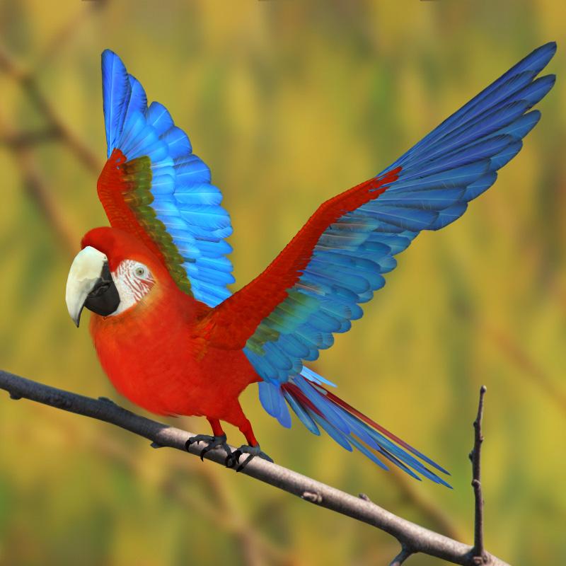 金刚鹦鹉3D打印模型,金刚鹦鹉3D模型下载,3D打印金刚鹦鹉模型下载,金刚鹦鹉3D模型,金刚鹦鹉STL格式文件,金刚鹦鹉3D打印模型免费下载,3D打印模型库